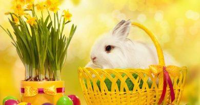 Paște fericit!